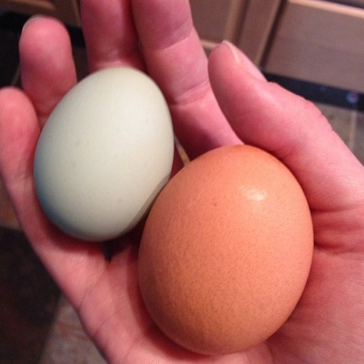 6.18.13 egg comparison