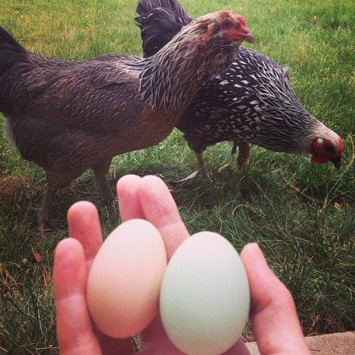 6.23.13 eggs