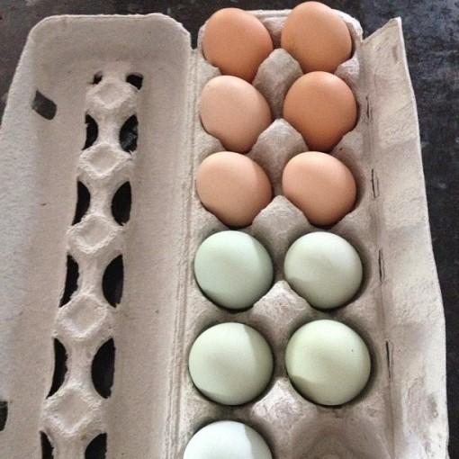 8.11.13 eggs
