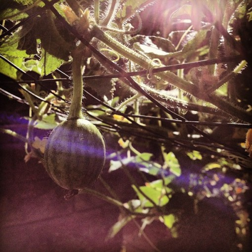 wee watermelon 7.28.13